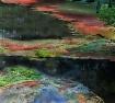 The Colorful Alga...