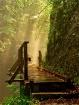 path of a dreamer...