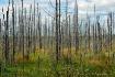 MINNESOTA FOREST ...