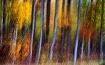 Autumn Alà Mode