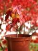 Autumn Planted
