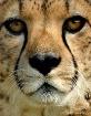 Eyes of Extinctio...