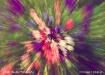 Flowers explosion...