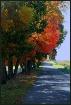 Fall Road...