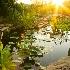 © Randy D. Dinkins PhotoID # 7153584: Arboretum Pond Sunrise