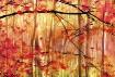 Autumn Impression...