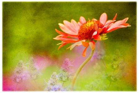 Photography Contest Grand Prize Winner - December 2008: Garden Dance