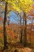 An Autumn Trail