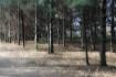 Trees Multiple Ex...