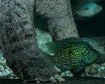Biiiiiig Turtle