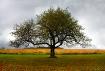Apple Tree in Aut...