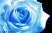 ~Blue~