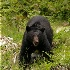 © Kathryn R. Kilpatrick PhotoID # 7351683: Black Bear