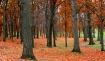 Fall at Fox Hill