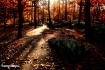 Evening Stroll Th...
