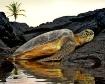 Turtle resting