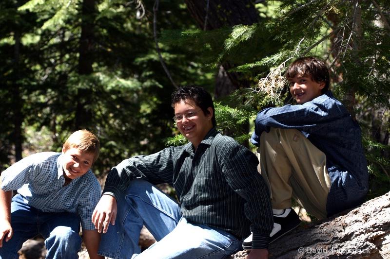 boys tree - ID: 7402039 © David E. Fitzpatrick