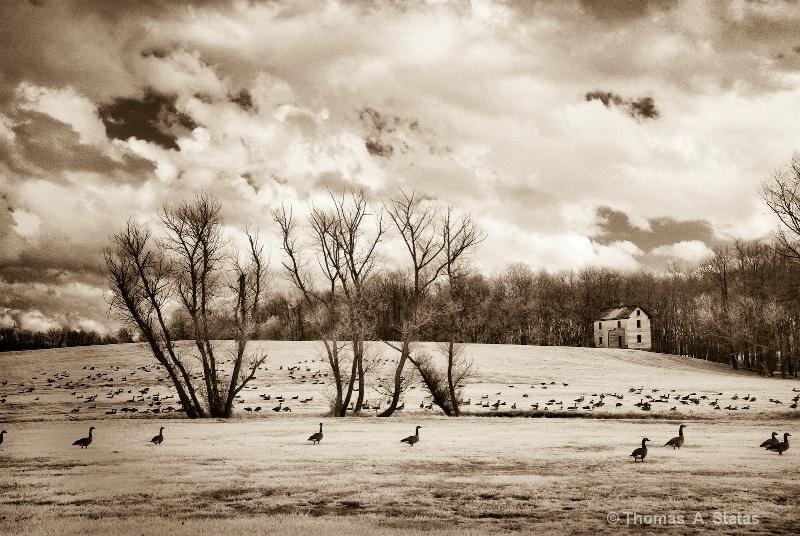 Howard County, MD Scene
