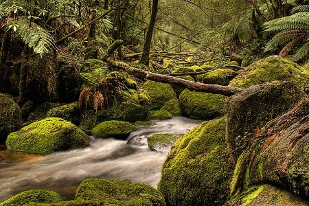 Temperate Forest Creek