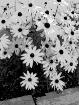 dd flowers