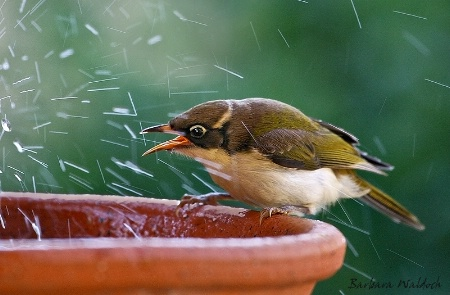 No splashing!