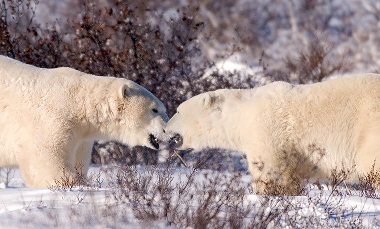 In Close Communication - ID: 7482513 © Gary W. Potts