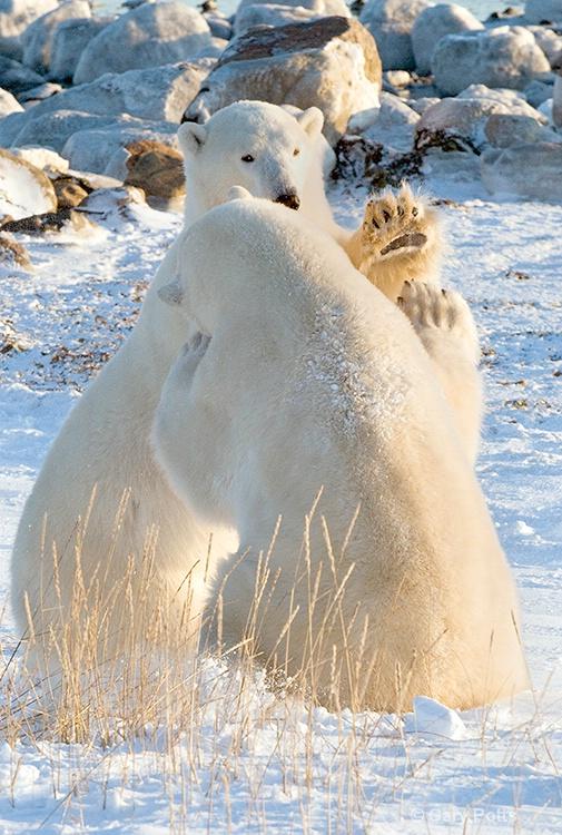 Bearly Greetings - ID: 7482517 © Gary W. Potts