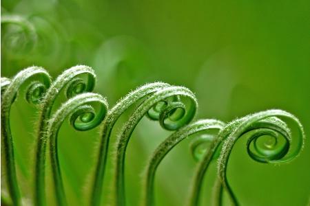 Green Curves