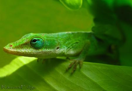 Lizard's World