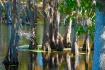 Fall on Bayou Des...