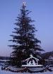Christmas Tree at...
