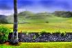 Dreaming of Hawai...