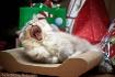 Christmas Yawn