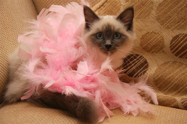Sophie In Pink
