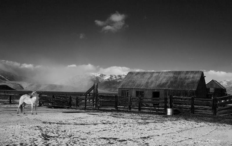 First Snow - ID: 7662707 © Paul Cutino