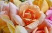 Bouquet for Carol...