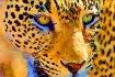 Leopard Serigraph