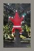 Santa Up A Tree