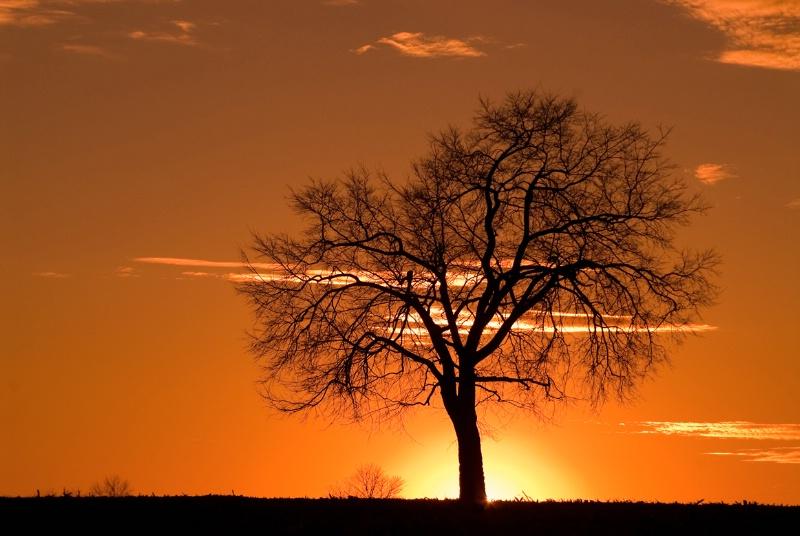 Monocacy Sunset Tree - ID: 7702934 © Don Johnson