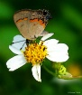 Tiny Butterfly Re...