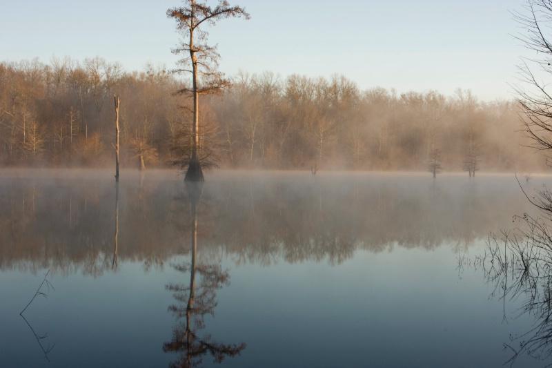 Cox Cypress, Wabbeseka, Arkansas,  12.29.08 - ID: 7714598 © Michael S. Couch