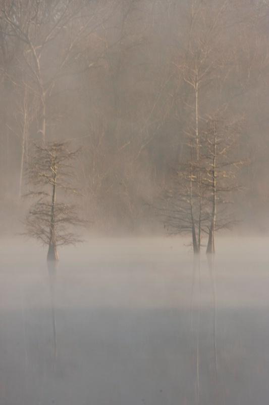 Cox Cypress, Wabbeseka, Arkansas,  12.29.08 - ID: 7714601 © Michael S. Couch