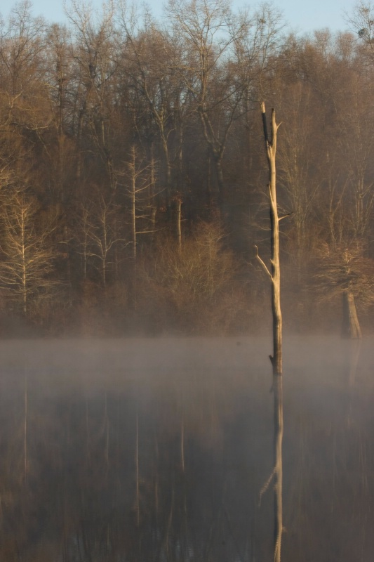 """Solitude"", Wabbeseka, Arkansas, 12.29.08 - ID: 7714602 © Michael S. Couch"