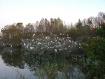 Rookery Pond