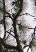 Serenova Pines