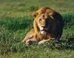 Serengeti Morning...