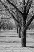 Carlsbad Orchard