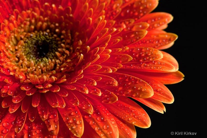 flower3 - ID: 7759650 © Kiril Kirkov