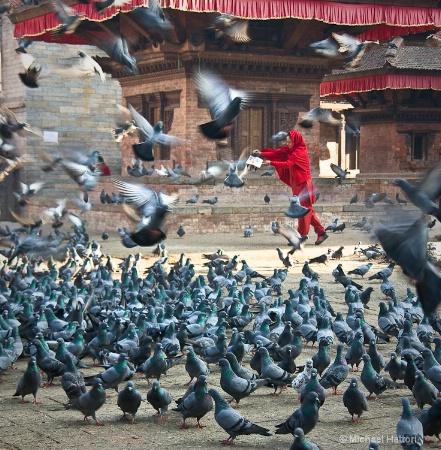 Feed the Birds, Feed the Birds