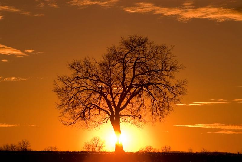 Tree at Sunset - ID: 7775631 © Don Johnson
